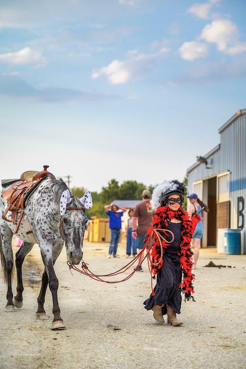 Gratis stockfoto met cavalerie, familie, festival