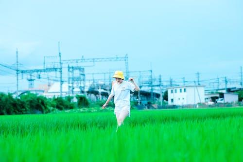 Fotos de stock gratuitas de agricultor, agricultura, caminando
