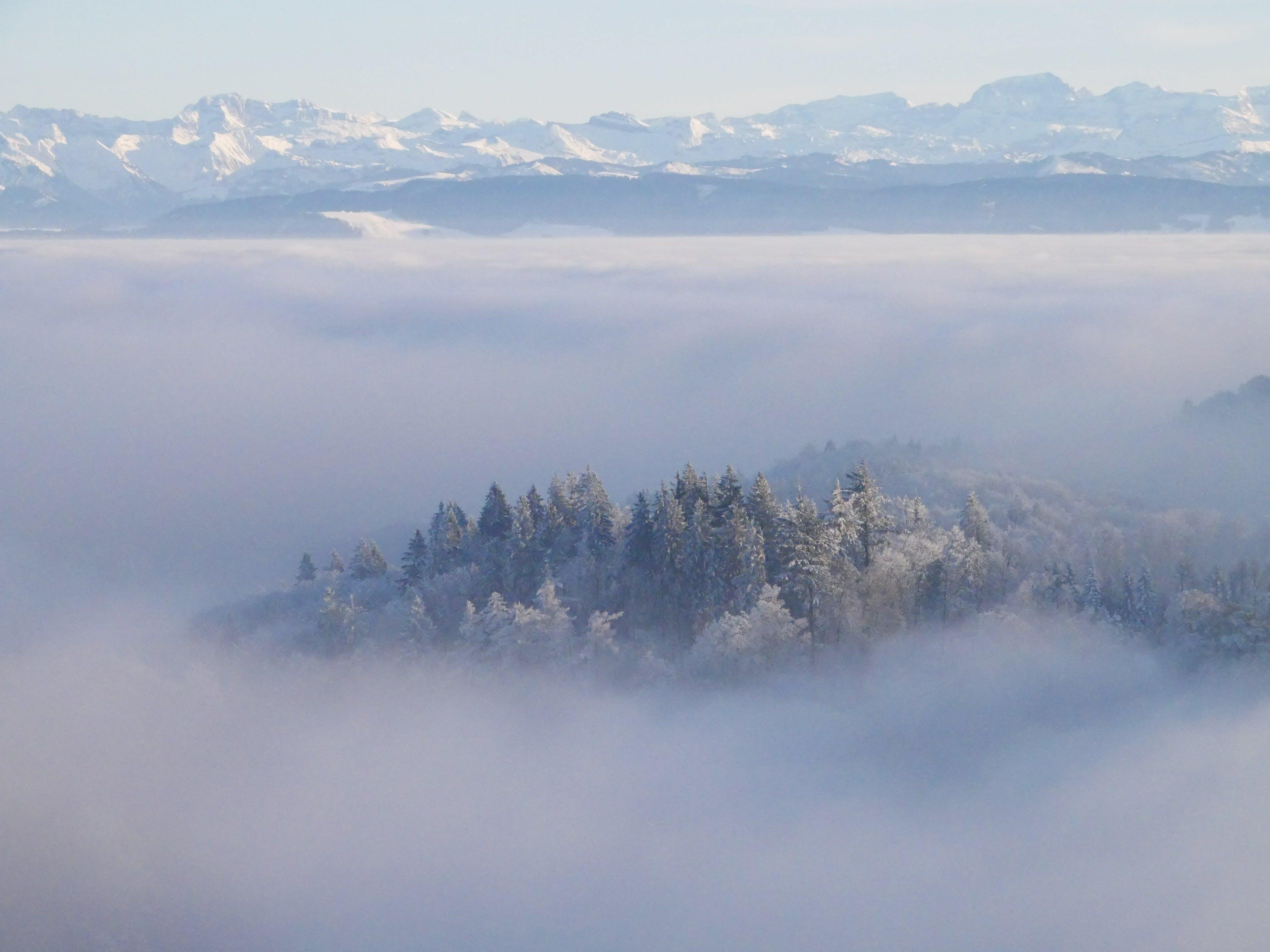 Foto stok gratis gambar latar belakang, kabut, kalem, mistik