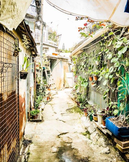 Kostnadsfri bild av bakgård, fattigdom, gårdsplan, hongkong
