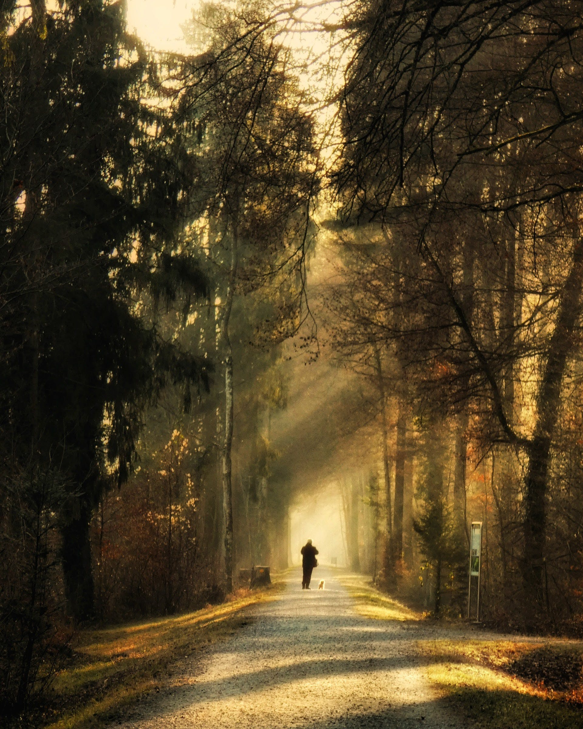 Person Standing on Pathway Surrounded by Trees