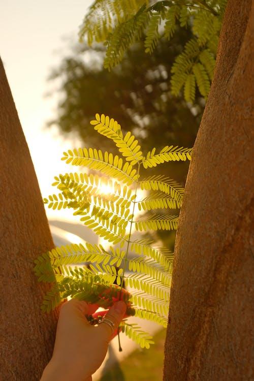 가지, 나무, 나무 둥치의 무료 스톡 사진
