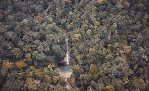 Ingyenes stockfotó erdő, fák, környezet, madártávlat témában