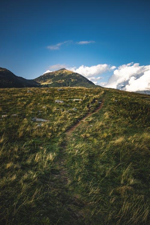 Δωρεάν στοκ φωτογραφιών με βουνό, γρασίδι, δέντρο