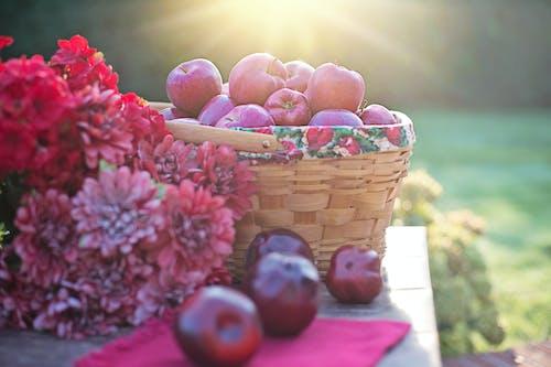 Kostenloses Stock Foto zu äpfel, herbst, herbstszene