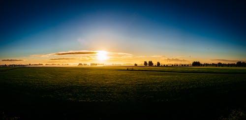 日出, 日落, 樹木, 草 的 免費圖庫相片