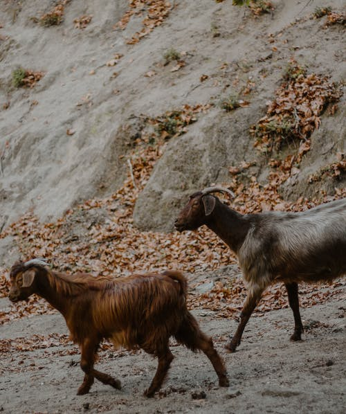 2 Brown and White Horses on Gray Rocky Ground
