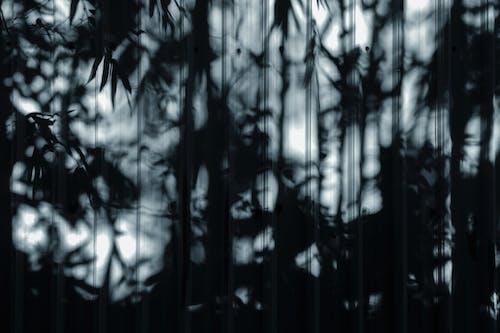 Foto stok gratis abstrak, bambu, bayangan