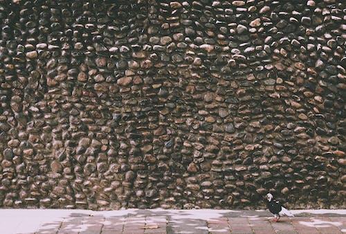 Imagine de stoc gratuită din piatră, textură, texturat, zid de piatră