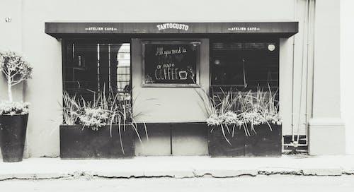Imagine de stoc gratuită din alb, alb negru, alb-negru, cafenea