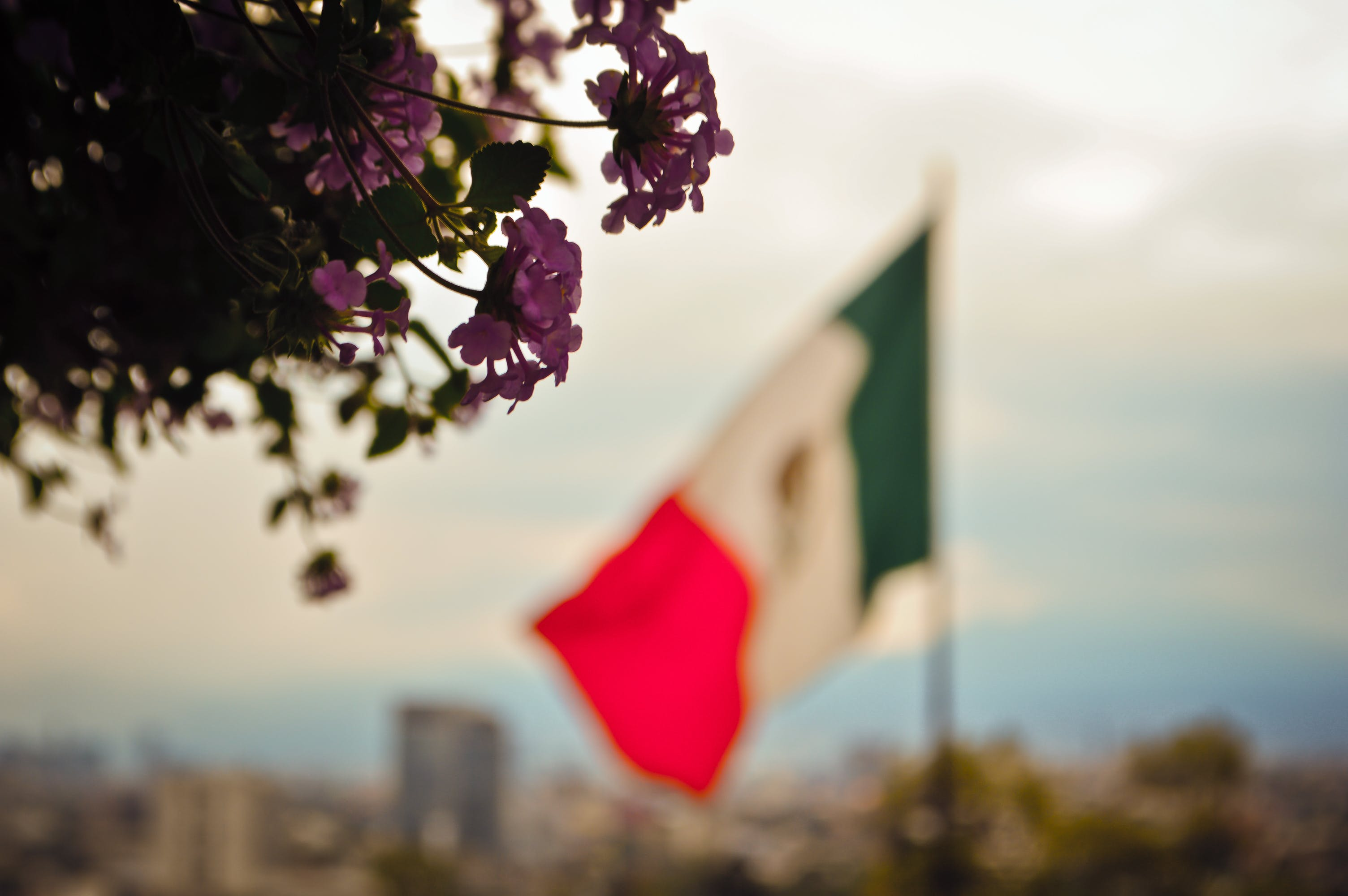 Free stock photo of flag, mexican, mexico