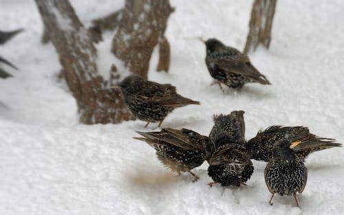 겨울, 나무, 눈, 눈 내리는의 무료 스톡 사진