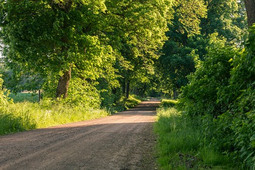 Free stock photo of dirt road