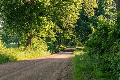 Foto d'estoc gratuïta de camí de carro, camí de terra, camí sense asfaltar, camí sense pavimentar