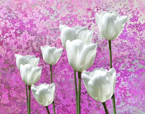 Free stock photo of blooming flowers, flower, flower background