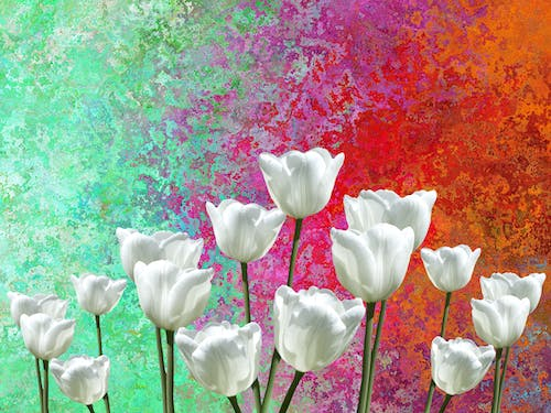 Free stock photo of blooming flowers, colorful, flower