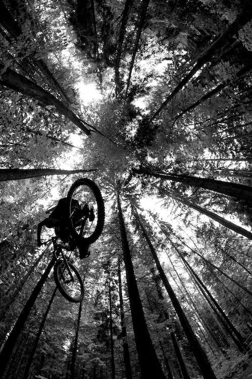 Foto profissional grátis de árvores, bicicleta, bike