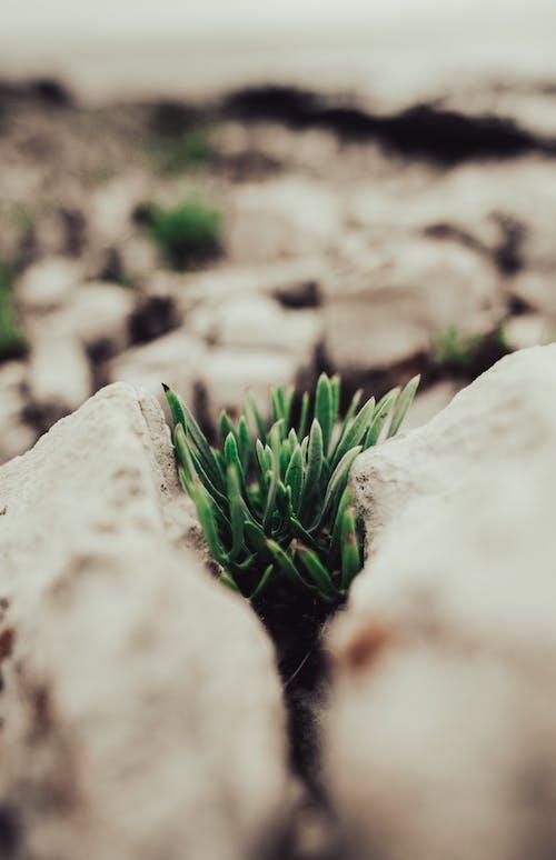 Immagine gratuita di avvicinamento, crescita, piante verdi