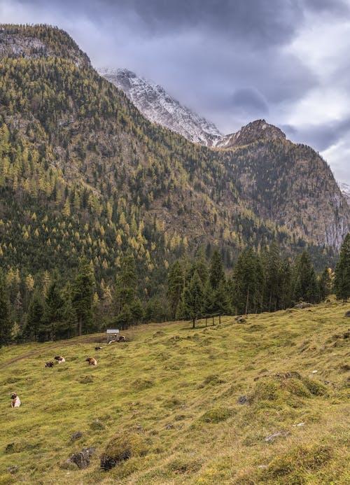 Foto d'estoc gratuïta de animal, arbres, bosc, camp