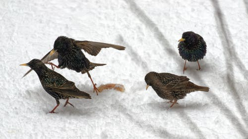 겨울, 눈, 눈 내리는, 음식을 위해 싸우는 것의 무료 스톡 사진