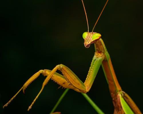Free stock photo of animal, antenna, biology