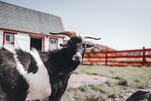 Foto profissional grátis de animal, ao ar livre, bicho