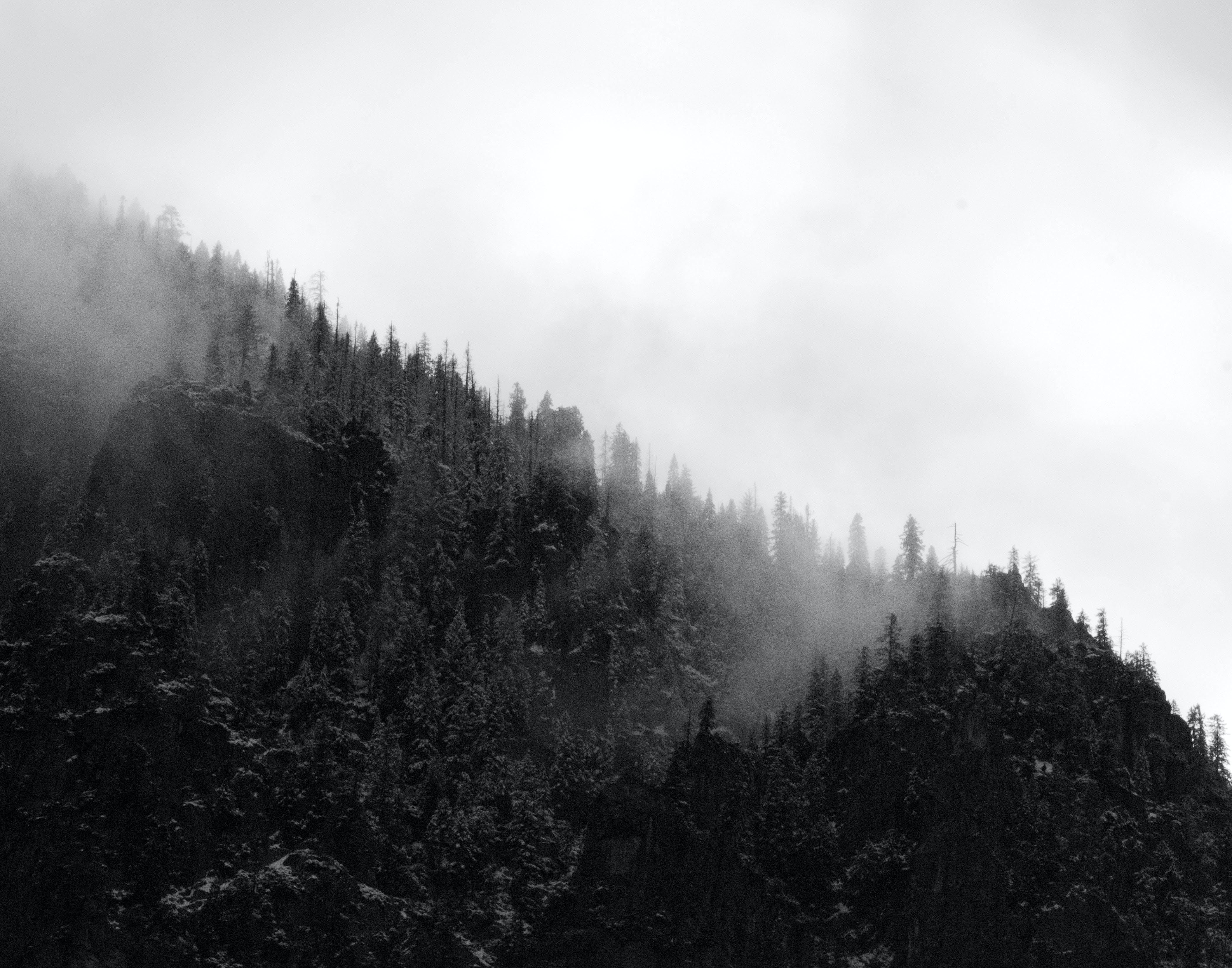 Δωρεάν στοκ φωτογραφιών με ασπρόμαυρο, αυγή, βουνό, δασικός