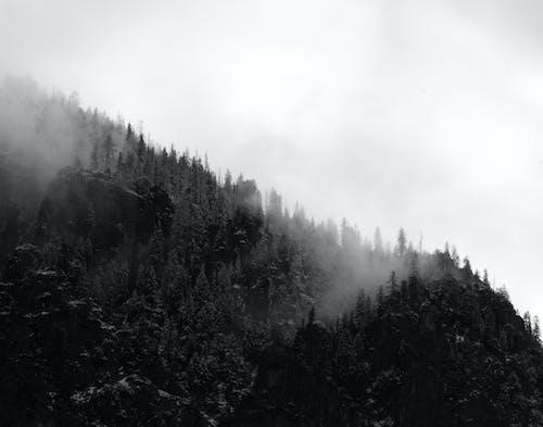 Základová fotografie zdarma na téma černobílý, hora, jednobarevný, jehličnany