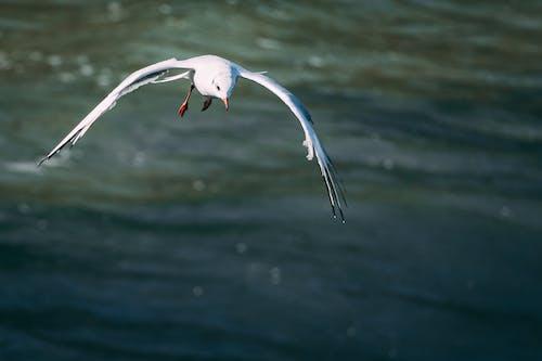Fotos de stock gratuitas de alas, animal, blanco