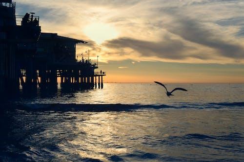 Photos gratuites de aube, coucher de soleil, eau, environnement