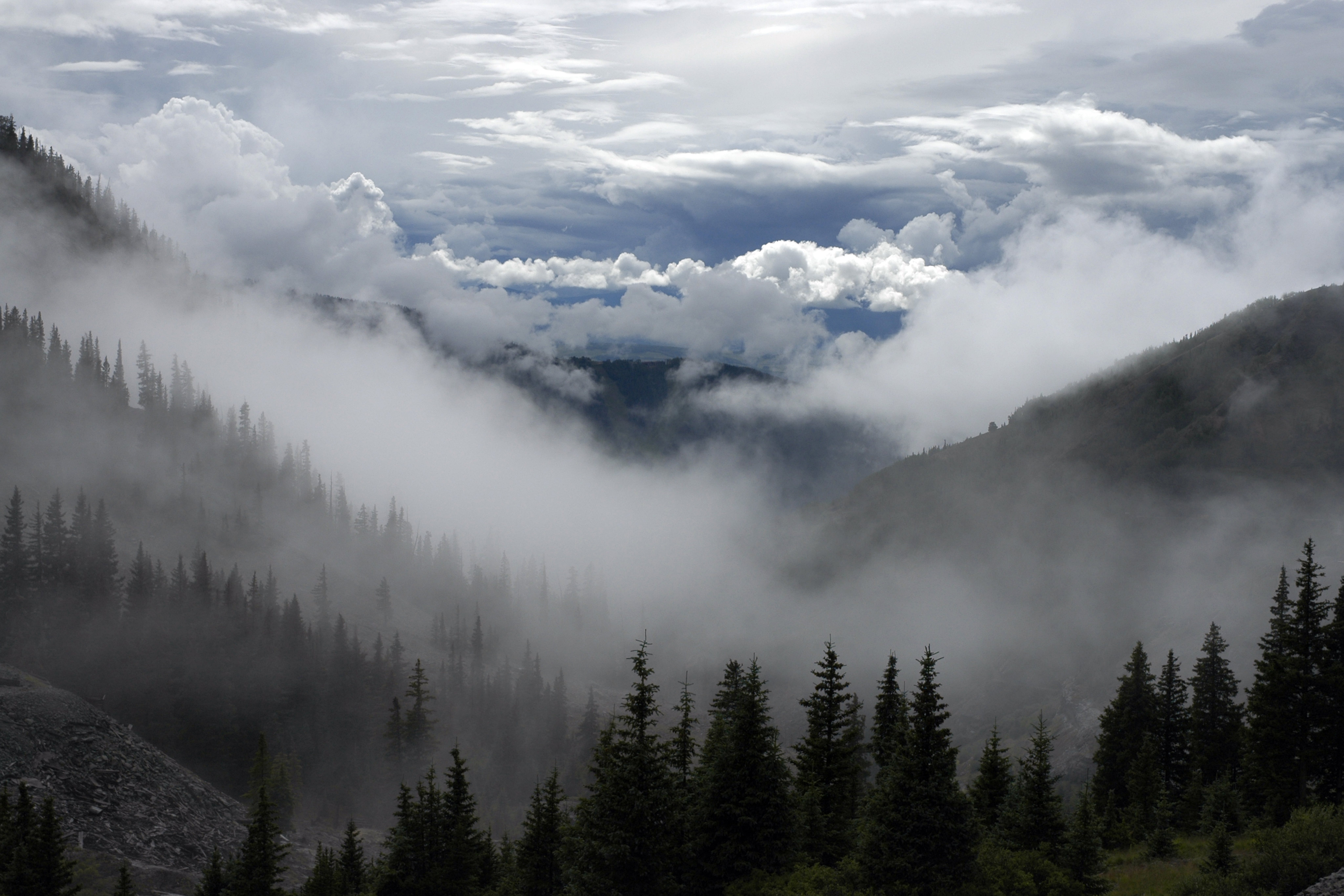 bjerge, diset, fyrretræer