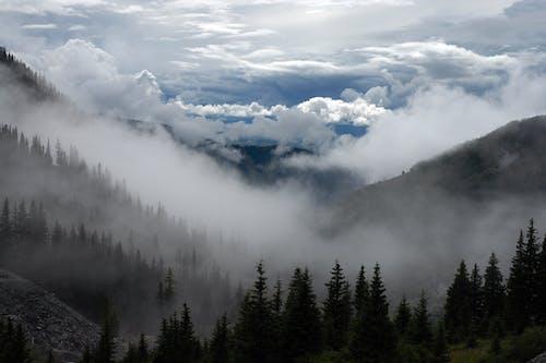 Immagine gratuita di abeti, alba, alberi, boschi