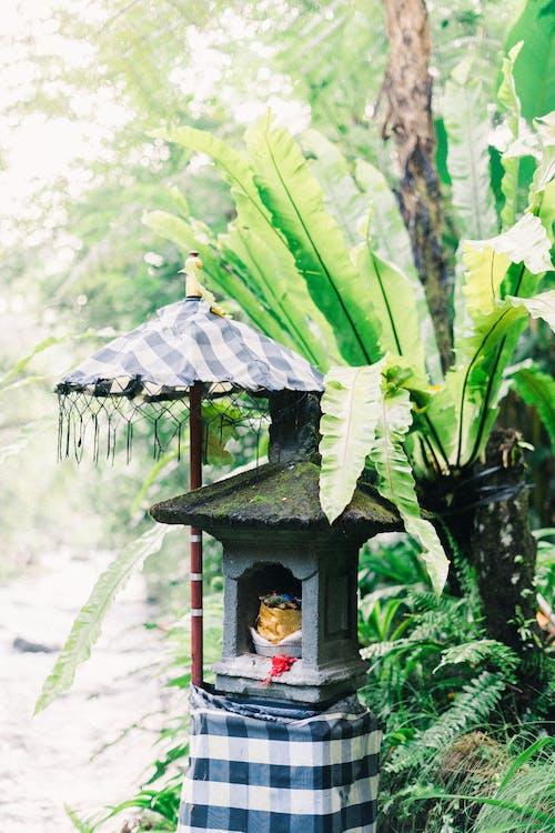 Безкоштовне стокове фото на тему «вродлива, вродливий, Деревина»