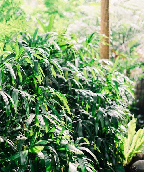 Безкоштовне стокове фото на тему «бамбук, ґрунт, Деревина»