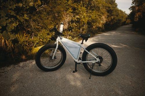 Kostenloses Stock Foto zu baum, draußen, fahrrad