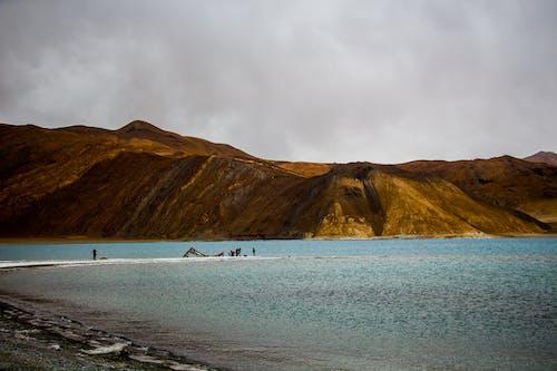 Foto stok gratis air, air biru, alam, anjing husky