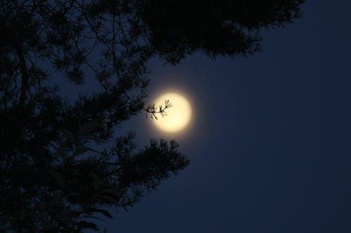 Free stock photo of moonlight