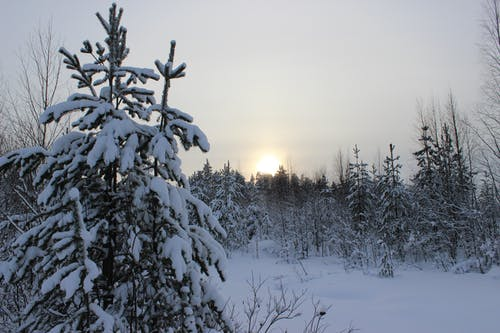 Free stock photo of sun, tree, winter
