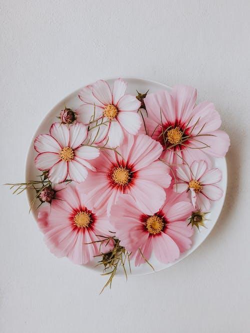 copy space, 꽃, 꽃잎의 무료 스톡 사진