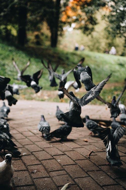 Flock of Black and White Birds on Brown Brick Floor