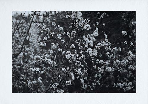 Free stock photo of b amp w, back and white, beautiful nature