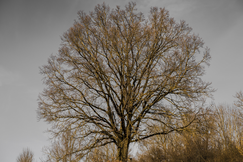 Gambar Aesthetic Pohon Dunia Gambar