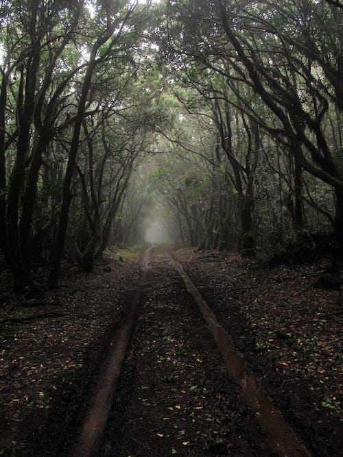 Foto stok gratis alam, hutan, jalan, kabut