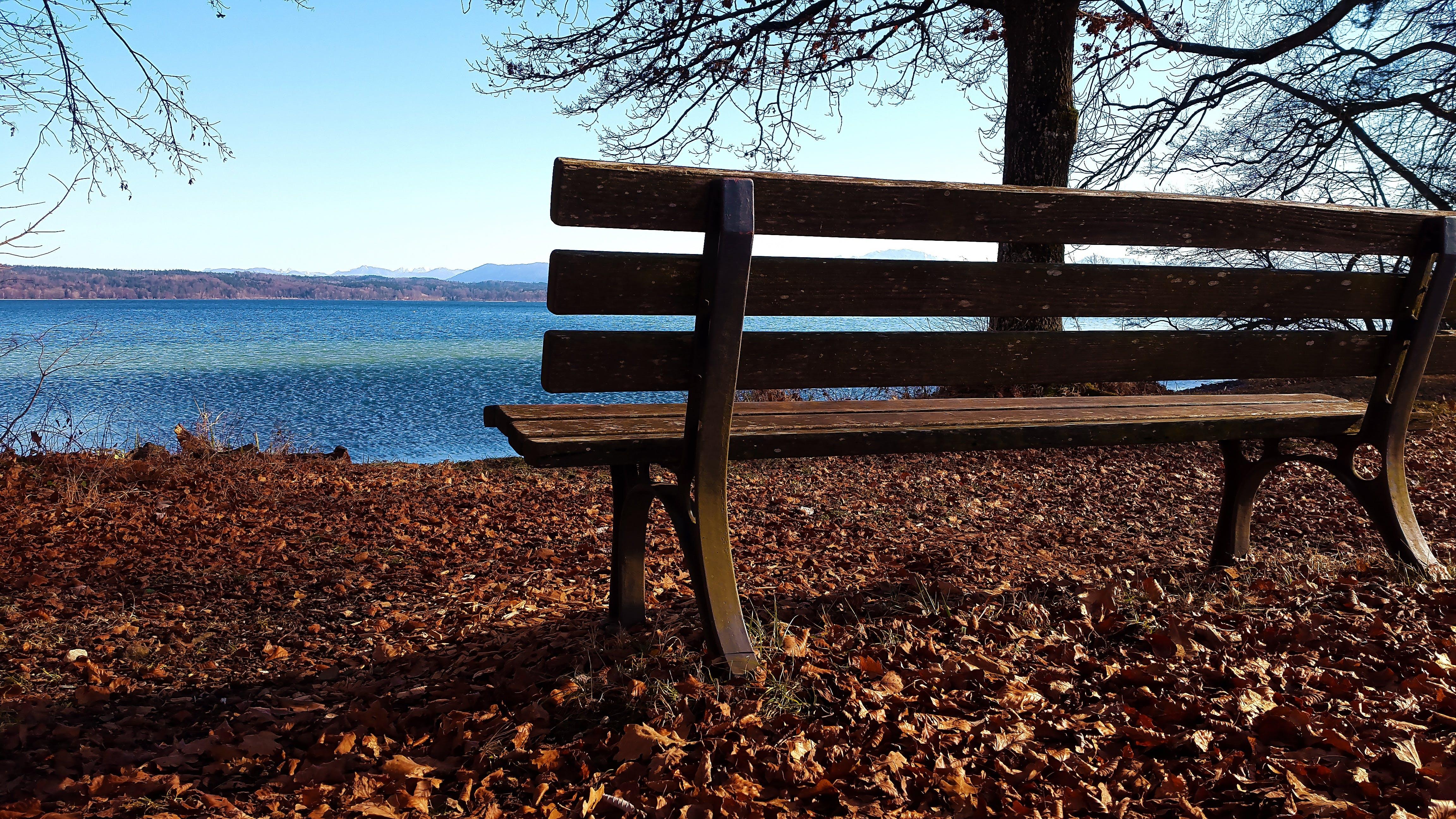 Free stock photo of alpine, bank, fall foliage, fall leaves