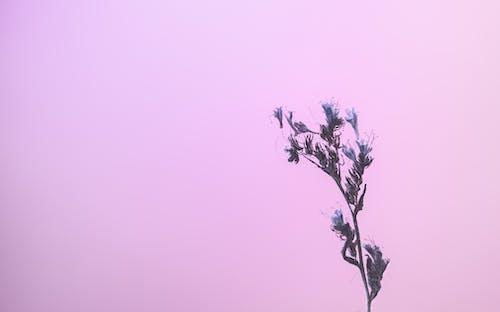 Kostenloses Stock Foto zu abbildung, abstrakt, ast