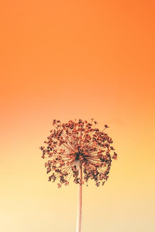 Kostenloses Stock Foto zu abstrakt, alho-poró selvagem, allium ampeloprasum
