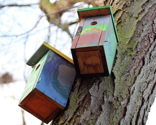 巣箱の無料の写真素材