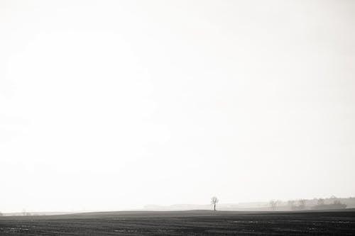 フィールド, 木, 田舎の無料の写真素材