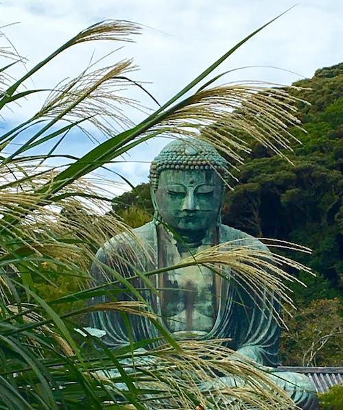 Photos gratuites de automne au japon, bouddha, dai bhuttsu, kamakura