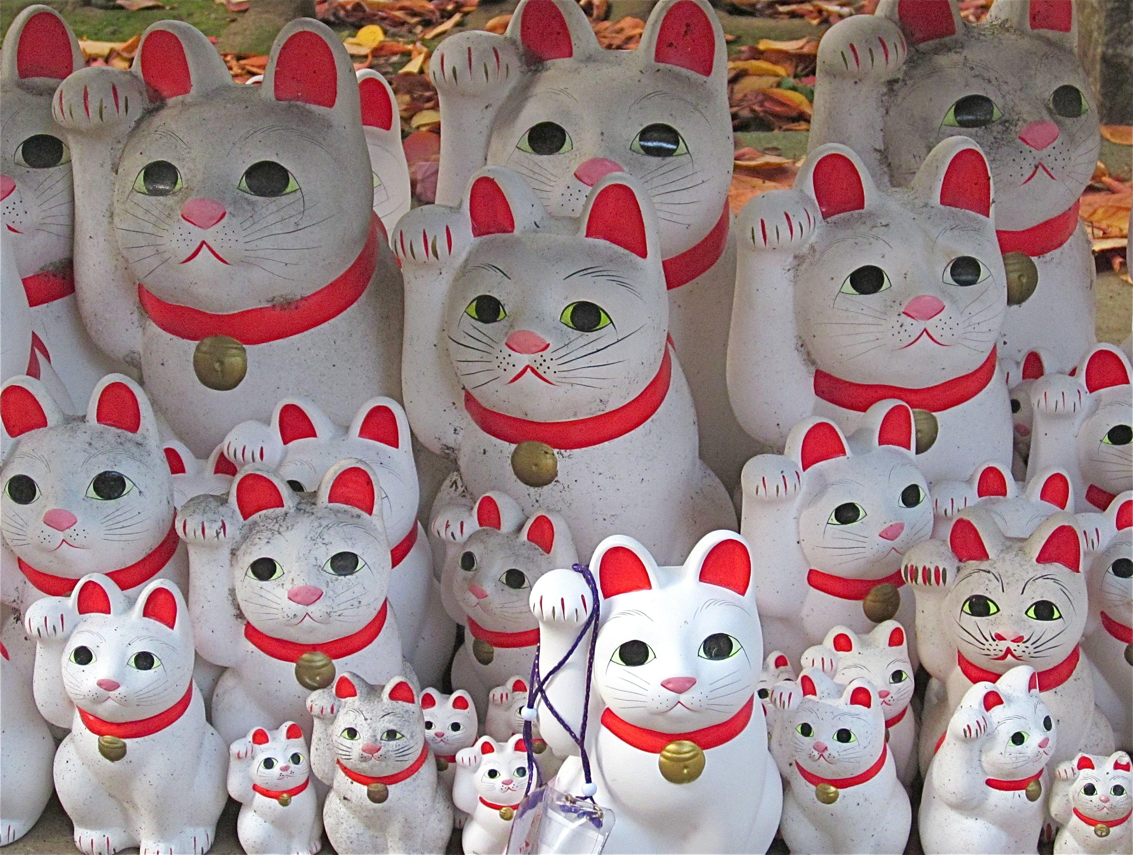 Δωρεάν στοκ φωτογραφιών με βουδιστικούς ναούς, γάτες, η ιαπωνία ταξιδεύει, Ιαπωνία